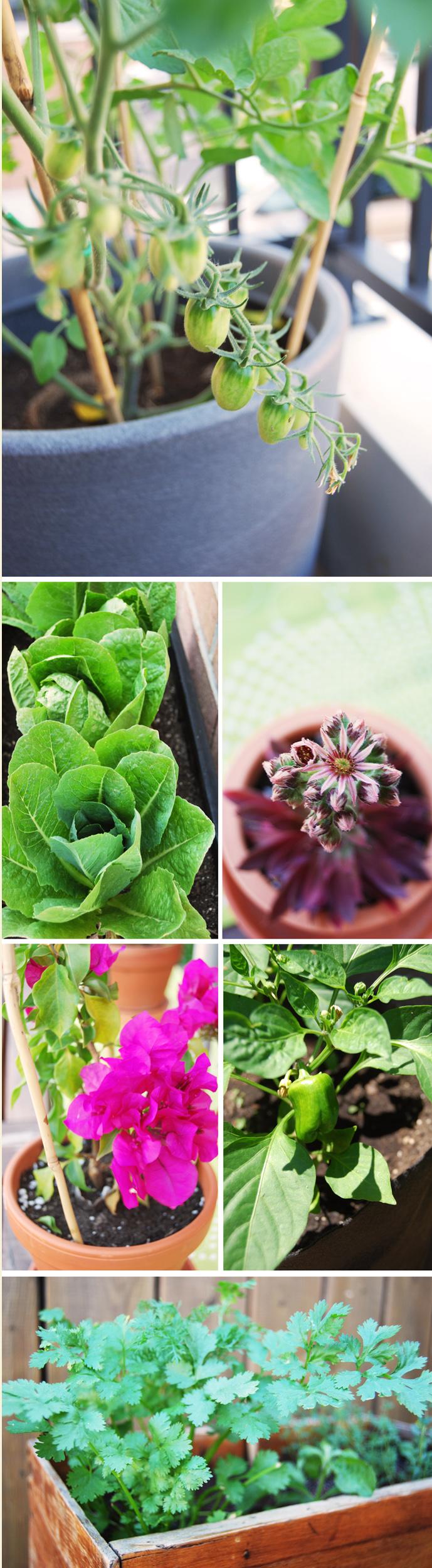 GardenJuly2011
